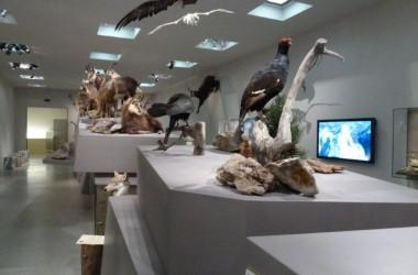 31 Landesmuseum