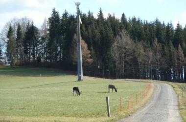 18-2-Esel-und-ein-Windrad-auf-800-m-Höhe