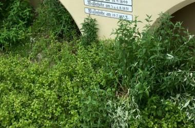 Veloferien-Chiemgau-Juni-2019-22