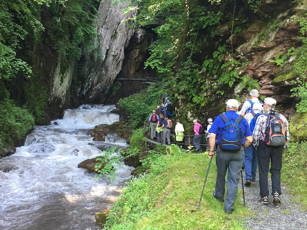 Wanderausflug im Wald am Fluss entlang